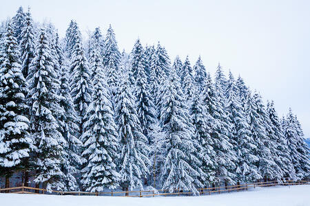 4 Ways to Help Beat Cabin Fever This Winter Season
