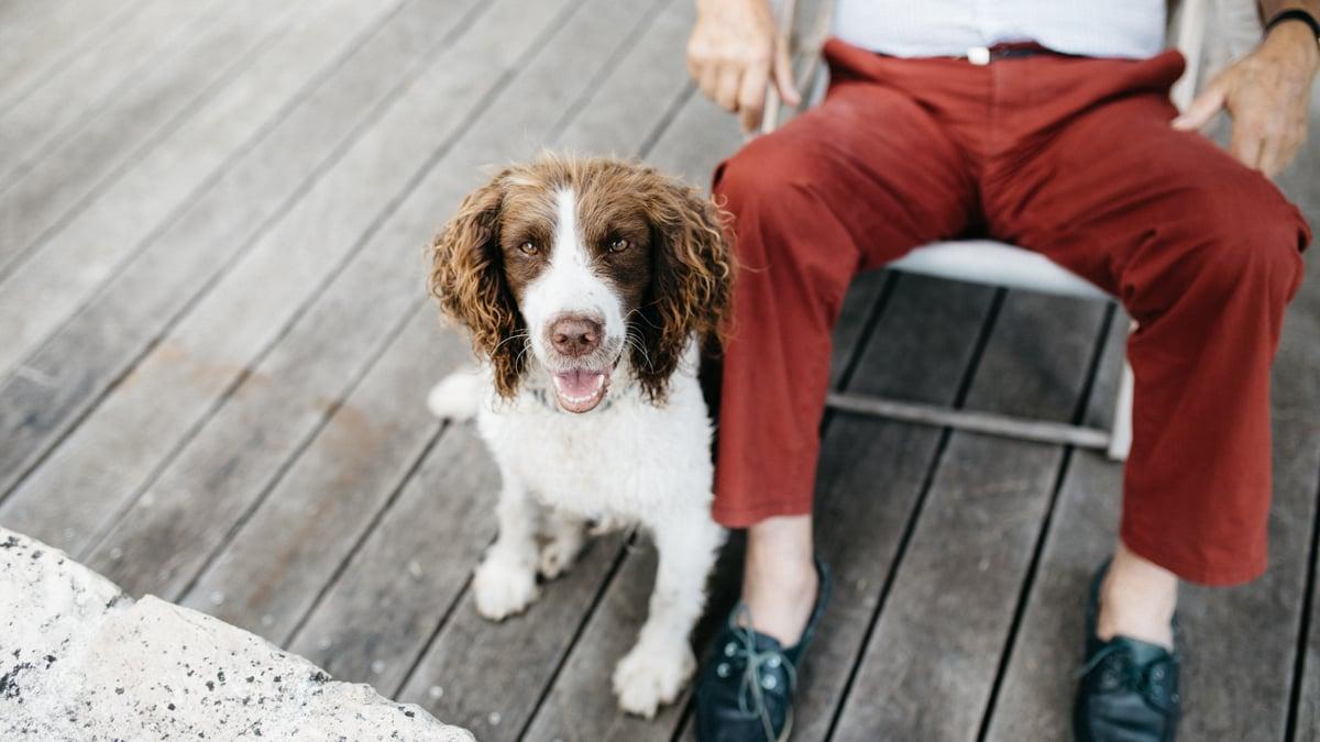 Pet Therapy_Origin
